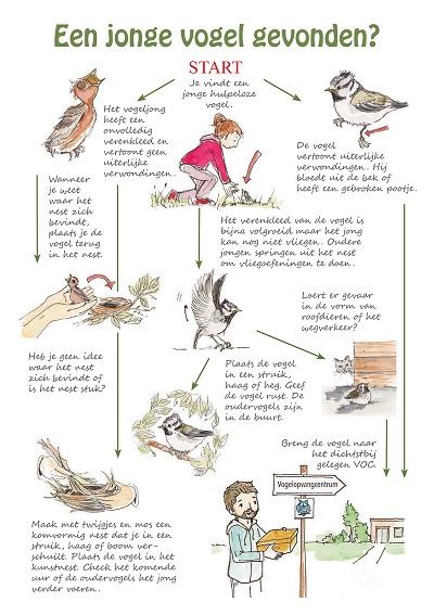 Ongebruikt Veel jonge vogels vliegen uit - Cartoon-Productions TB-59